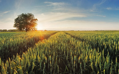 Acorn Agri & Food – 2020 Interim Results